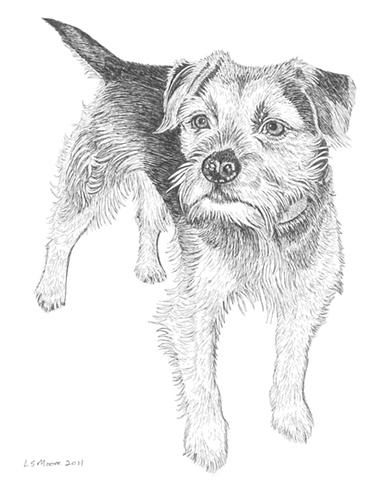 A pen and ink drawing of a Border terrier by Leslie Moore