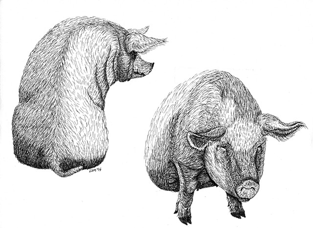 A pen and ink drawing of two big sows sittingdown by Leslie Moore of PenPets.