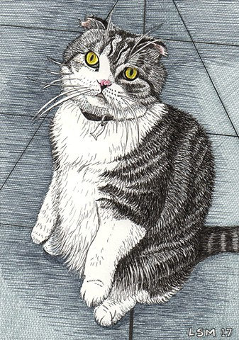 a colored pen and ink drawing of a Scottish Fold cat in prairie dog or Buddha pose by Leslie Moore of PenPets