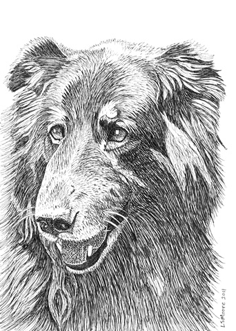 A pen and ink drawing of a shephed/retriever mixed breed dog by Leslie Moore.