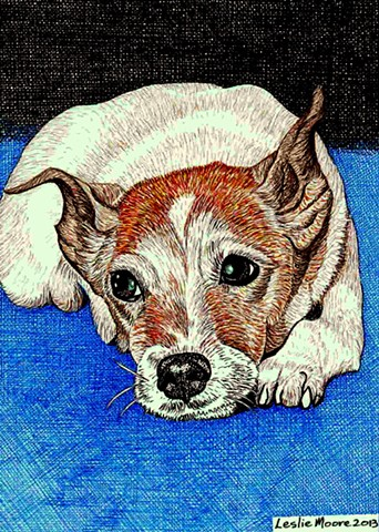 A colored pen-and-ink drawing of a Jack Russell Terrier by Leslie Moore of PenPets.