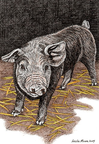 a colored pen and ink drawing of a young pig or shoat by Leslie Moore of PenPets