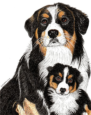 a colored pen and ink drawing of an Australian Shepherd as an adult dog and as a pup by Leslie Moore of PenPets