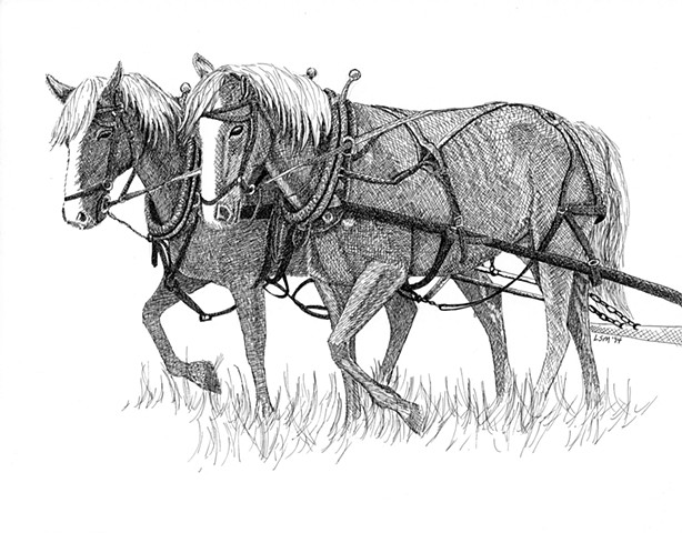 A pen and ink drawing of a team of farm horses by Leslie Moore of PenPets.