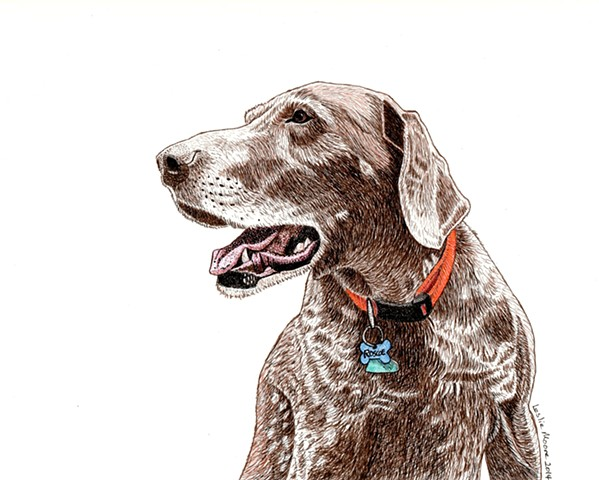 a colored pen and ink drawing of a German short-haired pointer by Leslie Moore of PenPets