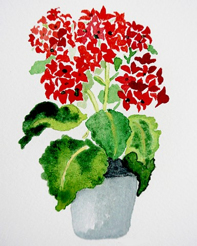 Cheerful red kalanchoe blossoms stand out against dark glossy green leaves
