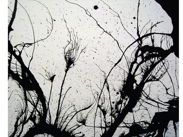Detail, Siren