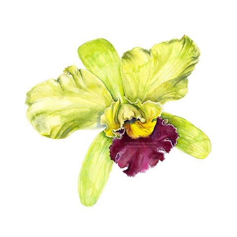 A botanical watercolor painting of a green and magenta cattleya orchid by Cindy Lou Scrivner