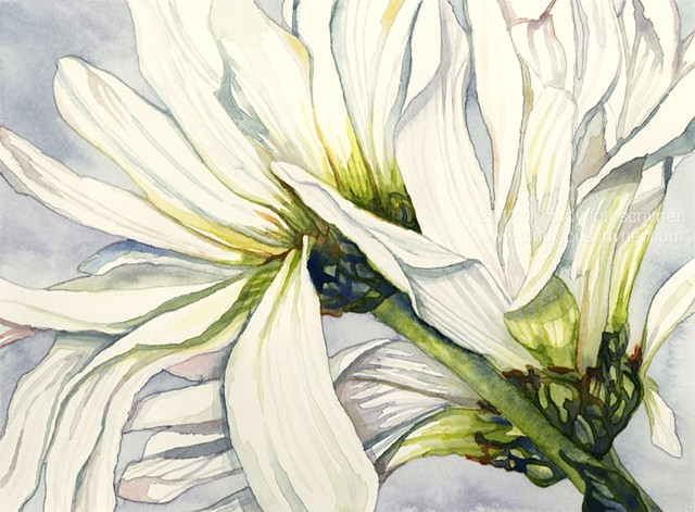 A watercolor painting of white daisies by Cindy Lou Scrivner