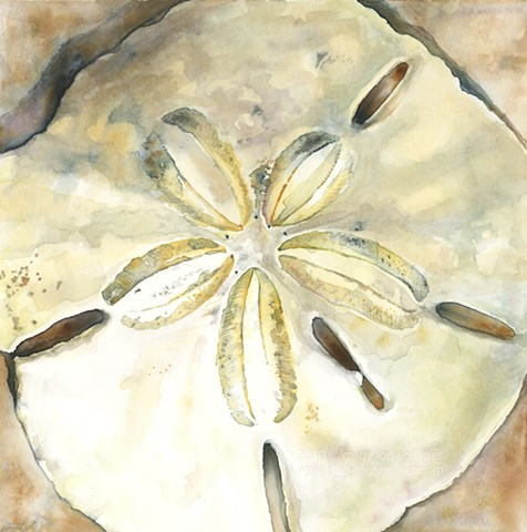 A watercolor painting of a luminous sand dollar by Cindy Lou Scrivner