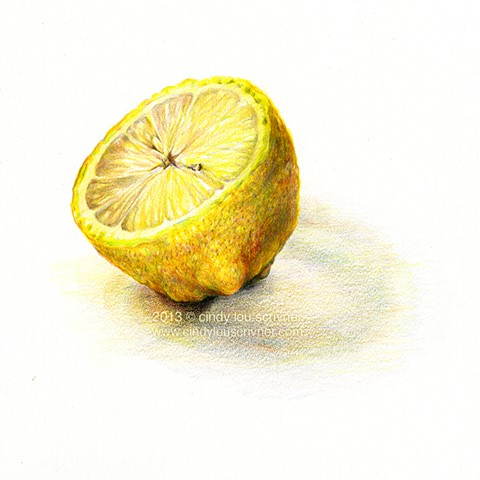 A lemon pencil drawing in prismacolor colored pencils on smooth Bristol board by Cindy Lou Scrivner