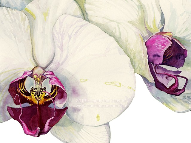 A botanical watercolor painting of magenta, fuchsia and cream Phalaenopsis orchids by Cindy Lou Scrivner