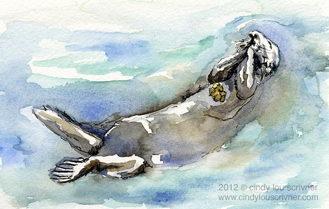 A watercolor and ink sketch of a playful Sea Otter swimming and eating barnacles created by Cindy Lou Scrivner