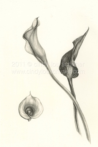 A graphite rendering of a calla lily and leaf by Cindy Lou Scrivner
