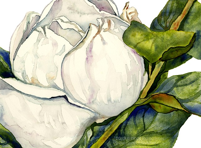 A watercolor painting of a magnolia flower by Cindy Lou Scrivner