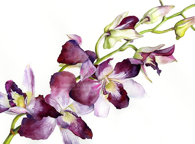 Magenta Orchidaceae Cymbidium, Radiant Orchids, dendrobium orchids in watercolor by Cindy Lou Scrivner