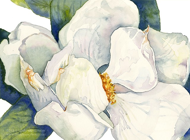 A watercolor painting of a magnolia flower by Cindy Lou Scrivner.