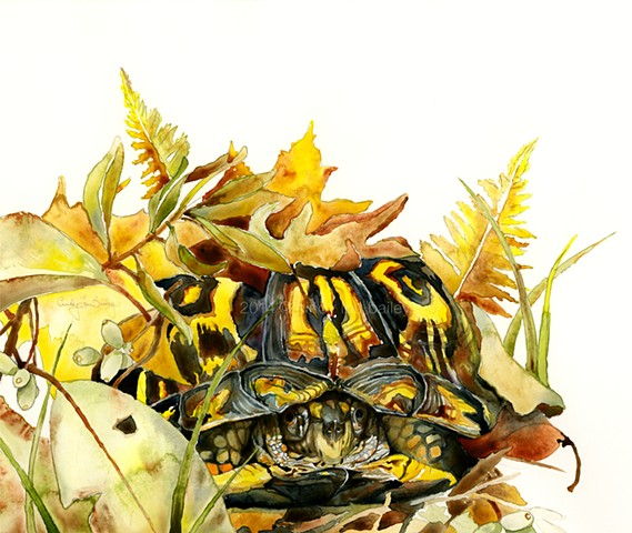 A watercolor painting of an Eastern Box Turtle hiding among Southern leaves. Camouflage. Turtle shell. by Cindy Lou Scrivner Bailey.  The Eastern Box Turtle, Terrapene carolina, burrows into dried leaves and twigs to hibernate for the winter.  The turtle'