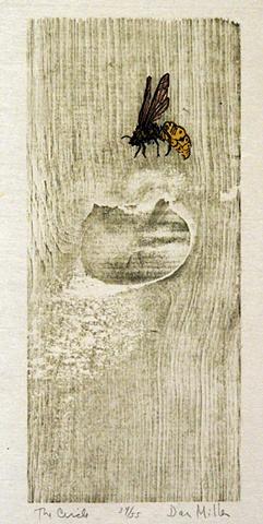 Dan Miller, artist, print maker, Turtle Gallery, Deer Isle, Maine, Stonington, Blue Hill, Ellsworth, Bar Harbor