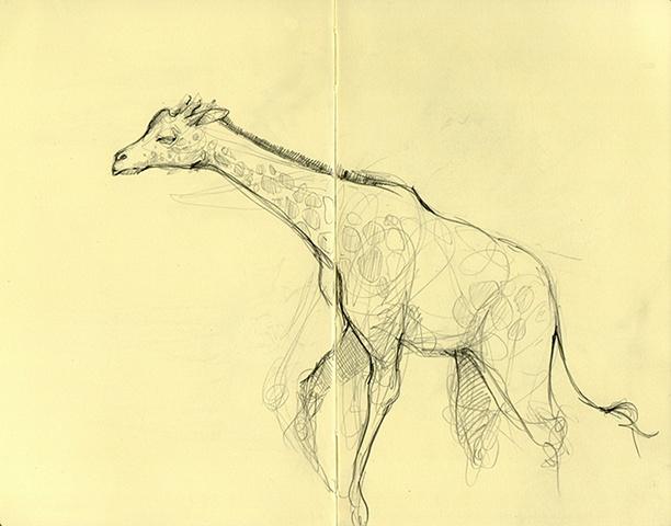 Zoo Sketches II