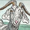 Friend Goat