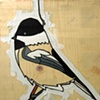 Chickadee #1
