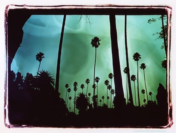 hollywood forever cemetery #3