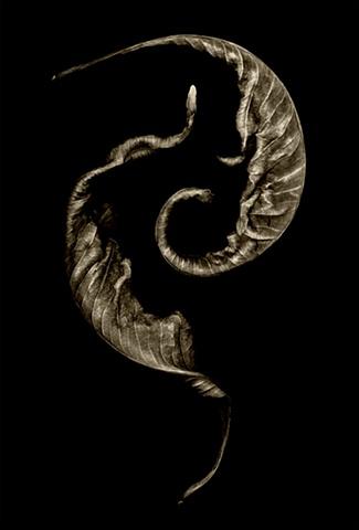 Yin & Yang Leaves