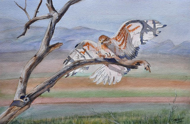 Bird of Prey - Ferruginous Hawk