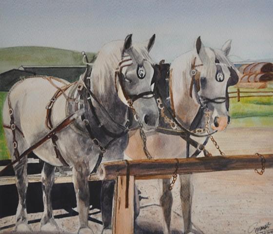 Alberta Horses