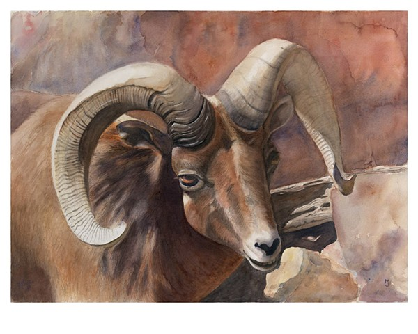BIG-HORNED RAM