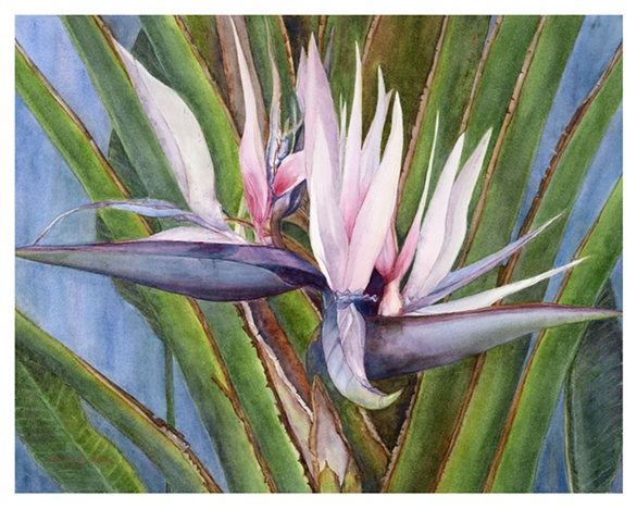 Frostbitten (Bird of Paradise)  SOLD