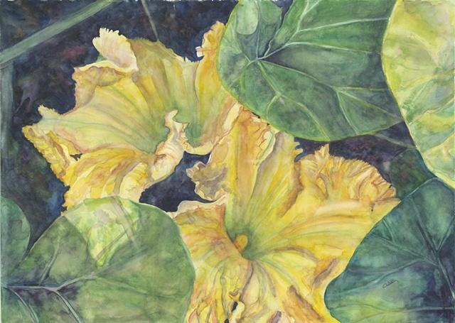 Yellow Squash Flower