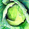 Cabbage  by Clair Breetz