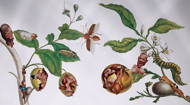 ANIMATION: Insects of Suriname in Vitro