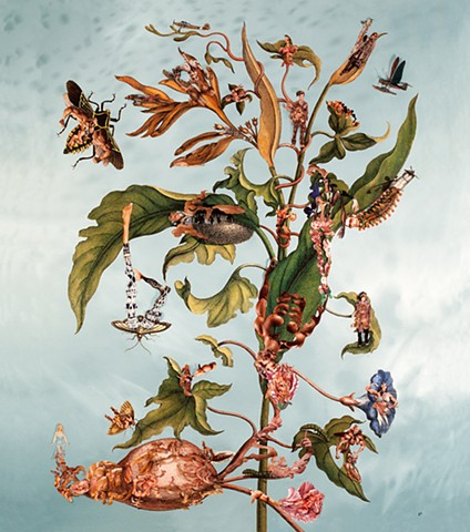 Dominique Paul, Merian, photography, collage, environment, male body, transformation, metamorphosis