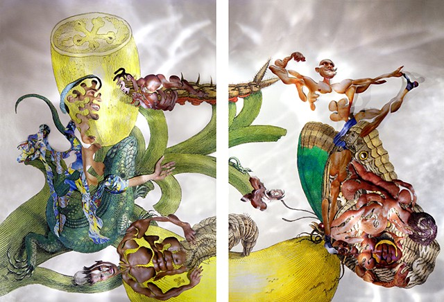 dominique paul, Insects of Suriname, Maria Sibylla Merian, collage, male body as object, biotech, genetic engineering