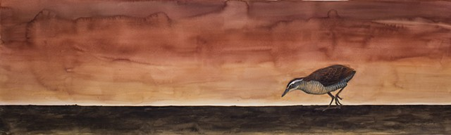 Wake Island Rail, extinct birds, watercolor