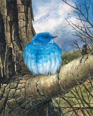 Mountain Bluebird art watercolor bird painting