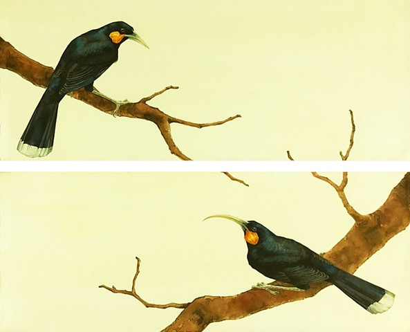 Huia Birds, extinct birds, extinct, painting, watercolor , birds