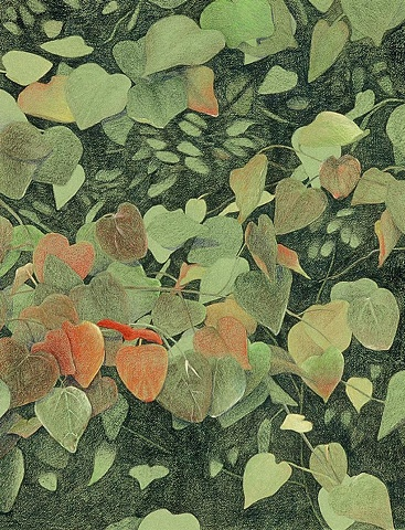 Colored pencil drawing from nature, on green Canson paper. leaves