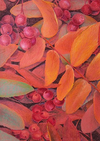 Drawing of autumn honey locust leaves and seeds on forest floor - Colored pencils on red Canson paper.