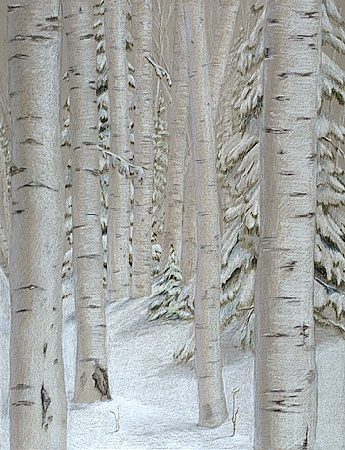 nature  trees  winterscene  Prismacolor drawing of a Michigan birch woods on gray Canson paper