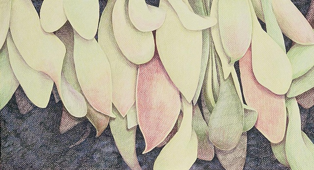 Colored pencil drawing of seeds, from nature