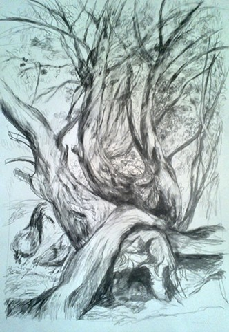 Forest Drawings and Paintings