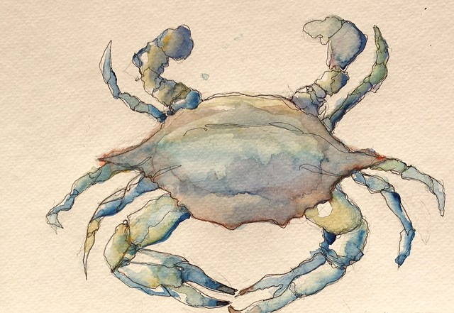 Summer Blue Crab Illustration Tiffany Douzart