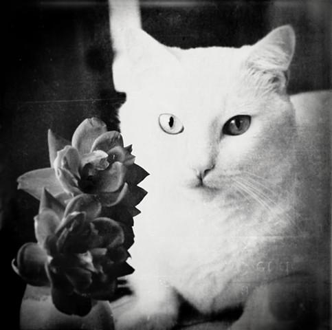 cinnabar loves roses