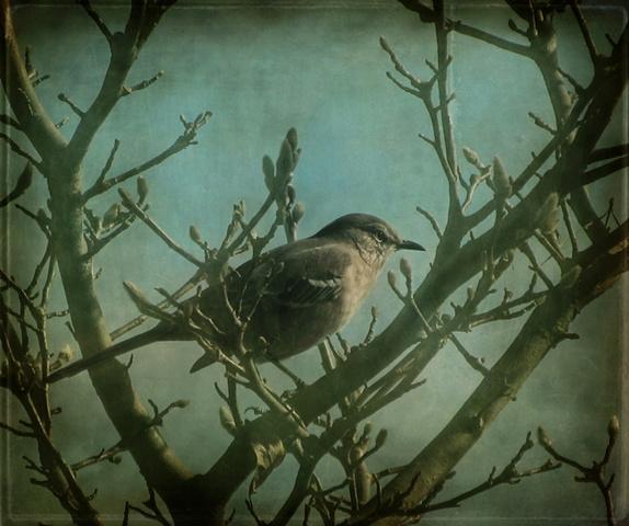 afternoon seeker