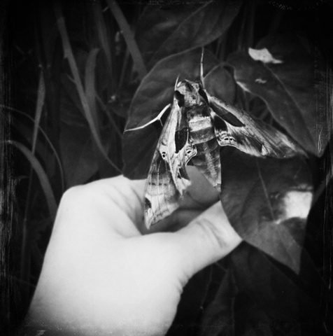 mothspotting
