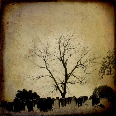 where the tree grows